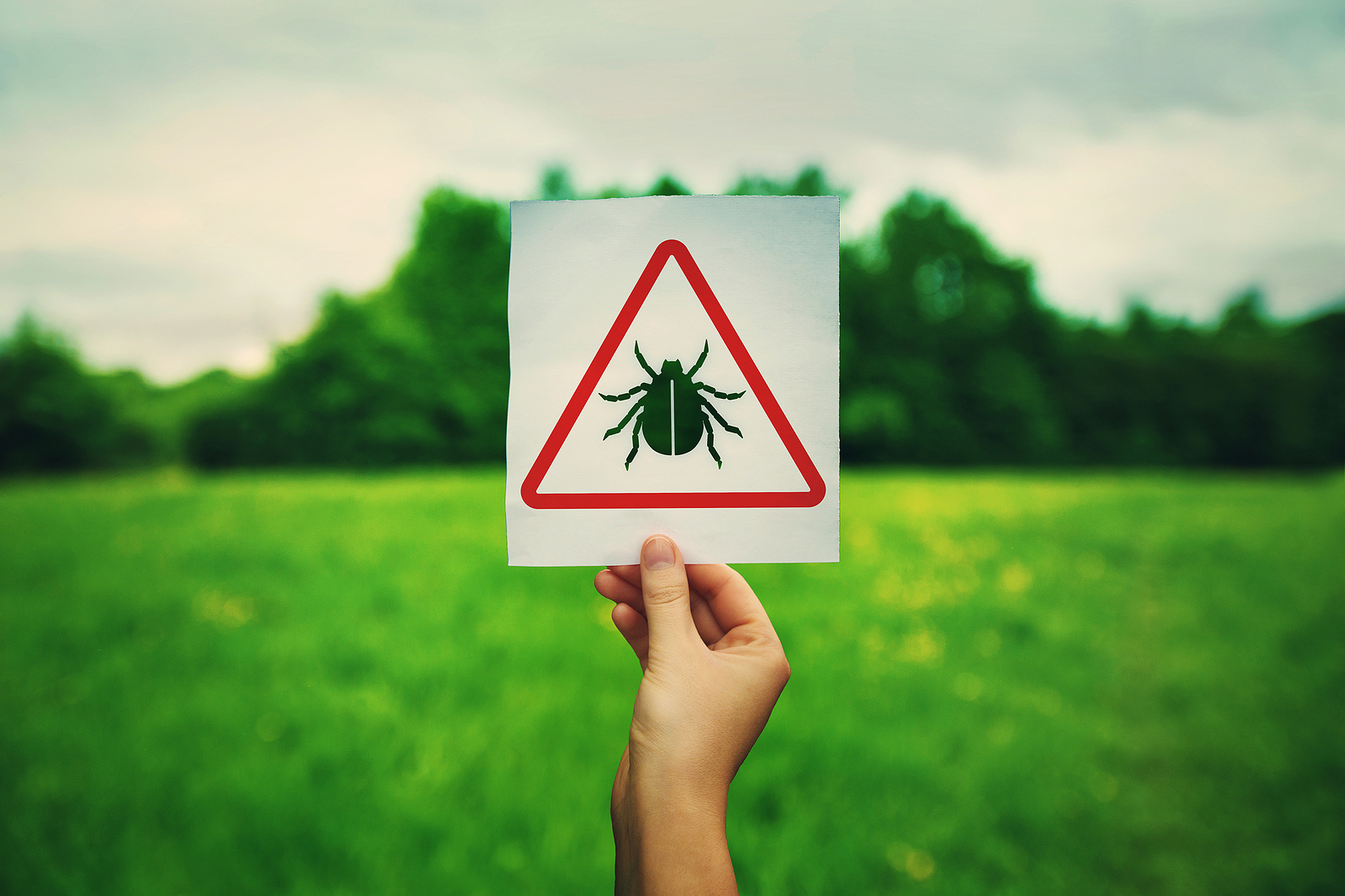 The protein that's an early-warning system against Lyme disease